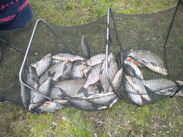 Fish caught in Carrigallen